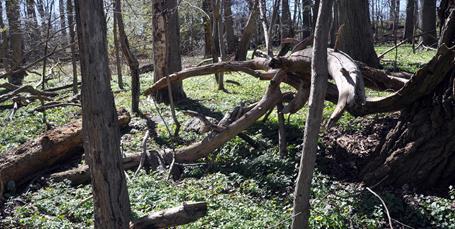 Longelse Bondegårdsskovs historie